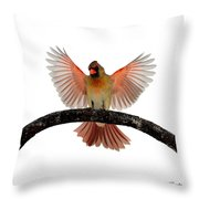 Cardinal Landing On Handle Throw Pillow