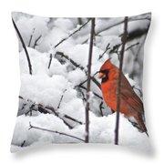 Cardinal Male 3669 Throw Pillow