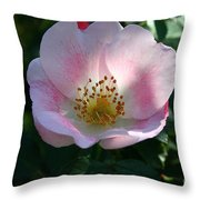 Carefree Delight Throw Pillow