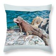 Caribbean Iguana Throw Pillow