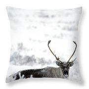 Caribou Rangifer Tarandus Dempster Throw Pillow