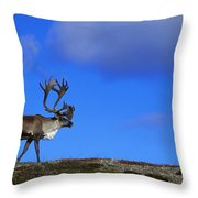 Caribou Walking On Hill Crest Throw Pillow