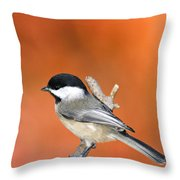 Carolina Chickadee - D007812 Throw Pillow
