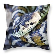 Carpet Python Throw Pillow