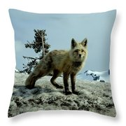 Cascade Red Fox 2 Throw Pillow