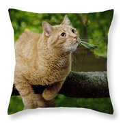 Cat Hanging On A Limb Throw Pillow