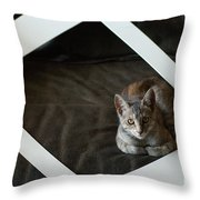 Cat In A Frame Throw Pillow