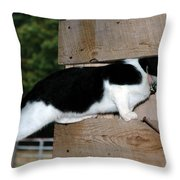 Cat Looking Thru The Knot Hole Throw Pillow
