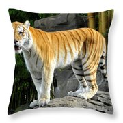 Cat On The Rocks Throw Pillow