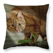 Cat Out On A Limb Throw Pillow