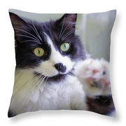 Cat Reaches For Camera Throw Pillow