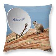 Cat Sat Throw Pillow