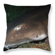 Cat Shark Sleeping, Pulau Tioman Throw Pillow