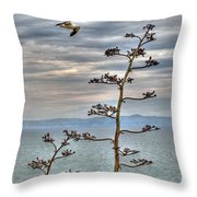 Catalina Gull And Channel Throw Pillow