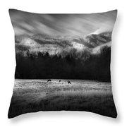 Cataloochee Elk Grazing The Fields Throw Pillow