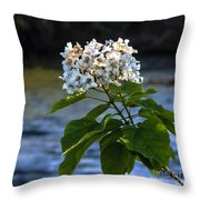Catalpa Beauty Throw Pillow