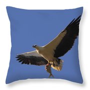 Catch Of The Day - White-bellied Sea-eagle Throw Pillow