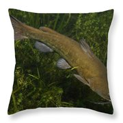 Catfish Protecting Her Young Throw Pillow