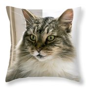Cats Are Magical Throw Pillow