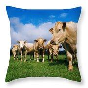 Cattle, Charolais Throw Pillow