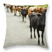Cattle Drive On A Road  Throw Pillow