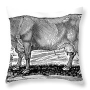 Cattle Throw Pillow