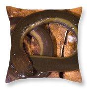 Caudacaecilia Asplenia Throw Pillow