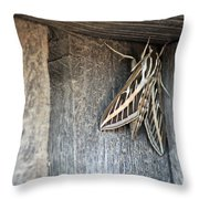 Caught In A Corner Throw Pillow