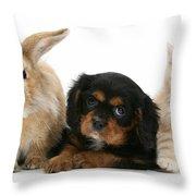 Cavalier King Charles Spaniel Pup Throw Pillow