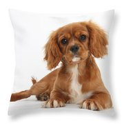 Cavalier King Charles Spaniel Puppy Throw Pillow