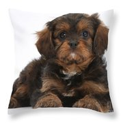 Cavapoo Pup Throw Pillow