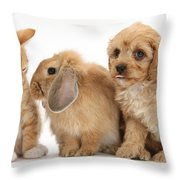 Cavapoo Pup, Rabbit And Ginger Kitten Throw Pillow by Mark Taylor