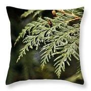 Cedar Due Droplets Throw Pillow