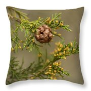 Cedar Rust Gall - Gymnosporangium Juniperi-virginianae Throw Pillow