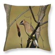 Cedar Waxwing - 2491 Throw Pillow
