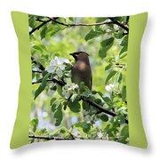 Cedar Waxwing Among Apple Blossoms Throw Pillow