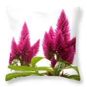 Celosia Argentea Throw Pillow