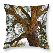 Centenarian Cork Tree Throw Pillow
