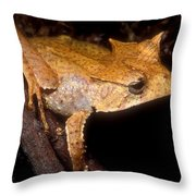 Central American Casque Headed Frog Throw Pillow