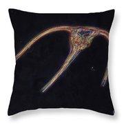 Ceratium Sp. Dinoflagellate, Lm Throw Pillow