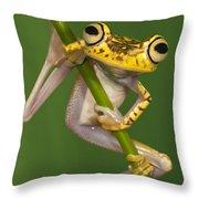 Chachi Tree Frog Hypsiboas Picturatus Throw Pillow