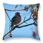 Chaffinch Throw Pillow