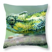 Chameleon In The Forests Of Mt Meru Throw Pillow