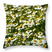 Chamomile Fields Throw Pillow