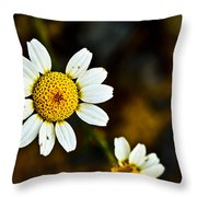 Chamomile Flower In Decay Throw Pillow