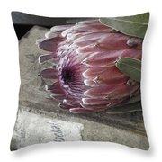 Protea Still Life Throw Pillow