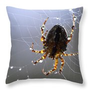 Charlottes Little Friend Throw Pillow by Bob Christopher