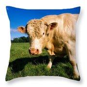 Charolais Bull, Ireland Throw Pillow