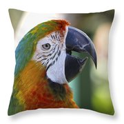 Chatty Macaw Throw Pillow