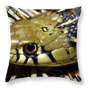 Checkered Garter Snakes Head Throw Pillow